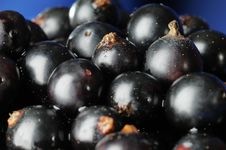 Free Black Currants. Stock Image - 5778411
