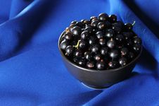 Free Black Currants. Stock Photos - 5778523
