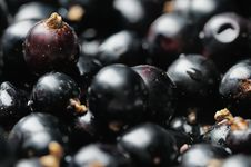 Free Black Currants. Royalty Free Stock Image - 5778606