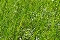 Free Green Grass. Stock Photos - 5781203