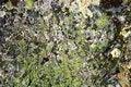 Free Moss Stock Photo - 5786060