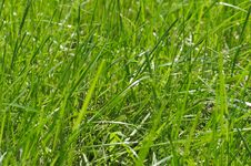 Free Green Grass. Stock Photos - 5781203
