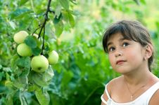Free Girl And Apple Royalty Free Stock Images - 5781439