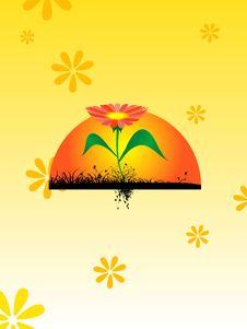 Free Flower With Rising Sun Stock Photos - 5782443