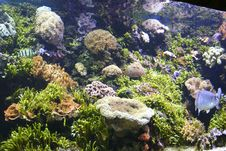 Free Beautifull Tropical Aquarium Royalty Free Stock Image - 5782656
