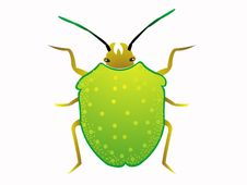 Free Little Bug Royalty Free Stock Images - 5782669