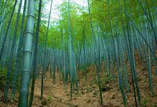 Free Bamboos Stock Image - 5782921