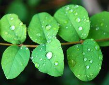 Free Rain Drops Royalty Free Stock Photo - 5783035