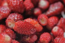Free Wild Strawberries. Stock Images - 5783464