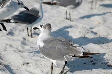 Free Seagulls At Beach Royalty Free Stock Photos - 5785028