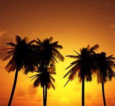 Free Beautiful Sunset Royalty Free Stock Photography - 5786237