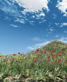 Free Field Of Flowers Stock Image - 5786441