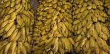 Free Brazil Bananas Stock Photo - 5788640