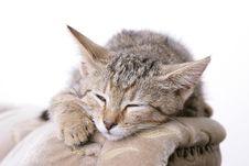 Free Sweet Kitty Royalty Free Stock Image - 5788746
