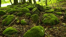 Free Moss On Stones Royalty Free Stock Photo - 5789425