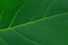 Free Macro Of Leaf Stock Photos - 5789443