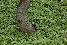 Free Bent Tree Stock Photos - 5789523