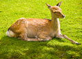Free Young Deer Stock Images - 5792464