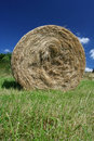 Free Hay Bale Royalty Free Stock Photography - 5794167