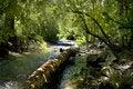 Free Mountain Stream Royalty Free Stock Photography - 5794817