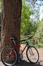 Free Bike Leaning On Tree Stock Photography - 5795762