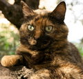 Free Cat On A Tree Stock Photography - 5796642
