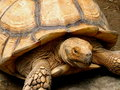 Free Big Tortoise Royalty Free Stock Image - 5796976