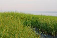 Free Sea Grass Royalty Free Stock Photos - 5790988