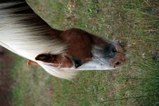 Free Horse Eating Stock Images - 5791074