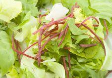 Free Green Salad Royalty Free Stock Image - 5792326