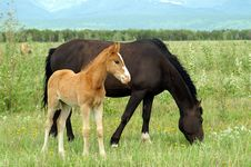 Free Foal Stock Images - 5793374