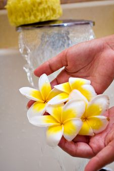 Free Exotic Flower In Water Royalty Free Stock Photos - 5794178