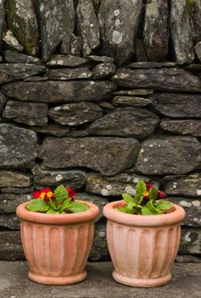 Free Flowers Ceramic Containers Stock Photo - 5794480
