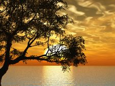 Free Old Tree Royalty Free Stock Image - 5794996