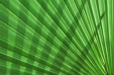 Free Palm Tree Leaf Pattern Royalty Free Stock Images - 5796119