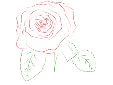 Free Rose Contour Royalty Free Stock Images - 5796269