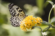 Free Butterfly Stock Photo - 5796420