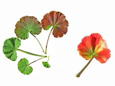Colourful Leaves Royalty Free Stock Photo