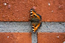 Free Brickwall Insect Stock Photos - 5799043