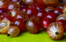 Free Beautiful Gooseberry Royalty Free Stock Image - 5799746