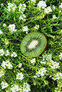 Free Kiwi In The Middle Of Grass Stock Photo - 581240