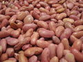 Free Haricot Beans Texture Stock Images - 582024