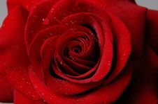 Free Rose 5 Royalty Free Stock Images - 580129