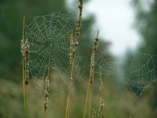 Free Cobweb. Stock Photos - 580593