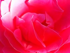 Free Red Rose Stock Photography - 580672