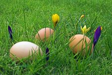 Free Easter Eggs In Grass Royalty Free Stock Images - 581369