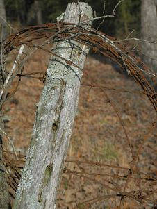 Free Barb Wire Stock Photography - 581812