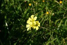 Free Yellow Flower 2 Royalty Free Stock Photos - 582148