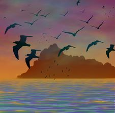 Free Seagull Silhouette Royalty Free Stock Image - 583746