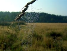 Free Cobweb. Royalty Free Stock Photography - 584157
